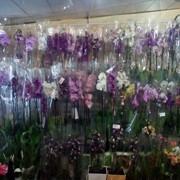 Орхидеи в горшочках фото