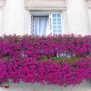 Цветущие балконы фото