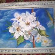 Цвет яблони фото