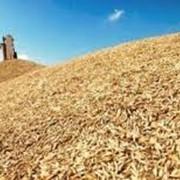 Семеноводство сельскохозяйственных культур фото