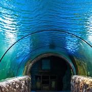 Аквариум для рыб разного размера фото