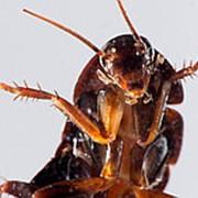 Уничтожение тараканов клопов блох комаров фото