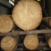 Сушка леса в сушильных камерах фото