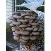 Переработка и реализация грибов. Заготовки лекарственного сырья, овощных и дикорастущих культур Западная Украины фото