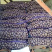 Картофель оптом Беларусь фото