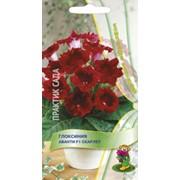 Семена комнатного растения Глоксиния Авати Скарлет фото