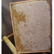 Мед в сотах, сотовый мед фото