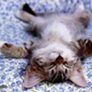 Диагностические исследования ветеринарные, Анализ шерсти животных для выявления заболеваний фото