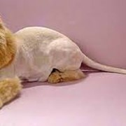 Стрижка животных фото