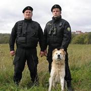 Охрана с собаками фото