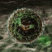 Исследования иммунитета фото