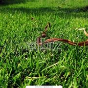 Уход за газонами фото