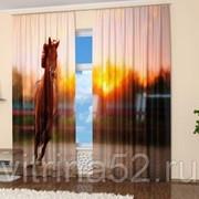 """Фотошторы """"Бегущий конь"""" фото"""