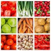 Закупка продуктов питания фото