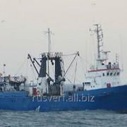 Траулер малый рыболовецкий на базе проекта 12961 фото