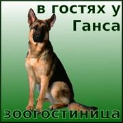 Услуги гостиницы для животных, Киевская область фото