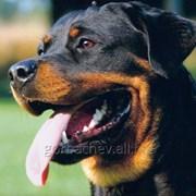 Каша для собак в Ставрополе. фото