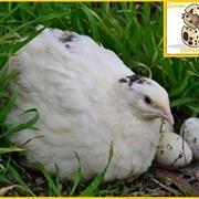 Мочалка для тела Cupellia SPA Black Ракушка фото