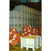 Овощехранилище, холодильный склад, холодильник промышленный фото