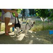 Поддержка для собак-инвалидов фото