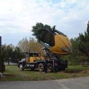 Посадка и пересадка деревьев крупномеров. фото