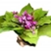 Растение шелковое фото
