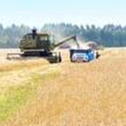 Перевозка зерна по Украине фото