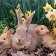 Комплексные проекты технологий кролиководства и пушного звероводства фото