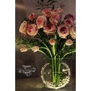 Английская роза Дэвид Остин, сорт Кейра фото