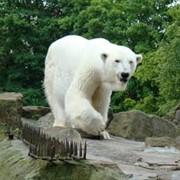 Животные для зоопарков фото