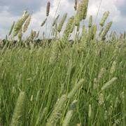 Очищення кормовых трав и свеклы фото