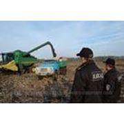 Охрана полей и сельхозугодий фото