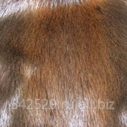 Продажа выделанных шкур бобра натурального нестриженного фото