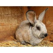 Комбикорм ПРЕМИУМ для кроликов РОСТ К92-2 от 30 дней и до забоя с травяною мукою 35%. фото