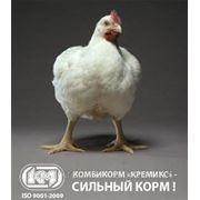Комбікорм ПК 5 курчата бройлери в віці 1-3 тижнів ( від 0 до 11 днів) фото
