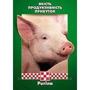 Пуріна Гровер для свиней фото