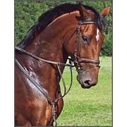 Страхование лошадей фото