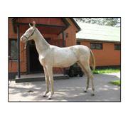 Прокат лошадей, РАЗВЕДЕНИЕ лошадей редкой АХАЛТЕКИНСКОЙ породы фото