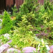 Устройство альпийских горок, рокариев, цветников,японских садиков фото