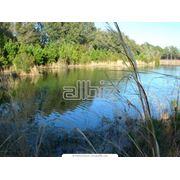 Экологический аудит мониторинг состояния окружающей среды. фото