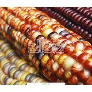 Маркировка ГМО фото