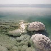 Грязь Мертвого Моря (350Мл) фото