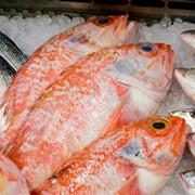 Можем обеспечить заморозку рыбы и рыбных продуктов фото