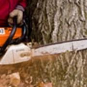 Удаляем деревья в Киеве и в Киевской области фото