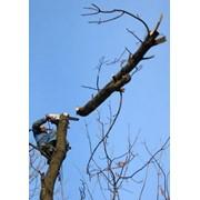 Спил деревьев целиком и по частям, обрезание мешающих веток, корчевание пней, распиловка на части фото