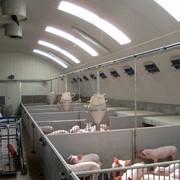 Системы отопления свинарников фото
