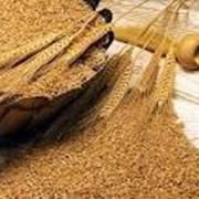 Отруби пшеничные 500г Мак-Вар фото