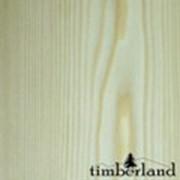 Сосна (Pinus sylvestris) фото