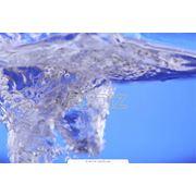 Биотестирование вод фото