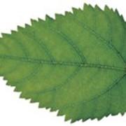 Программа Экологический паспорт природопользователя фото